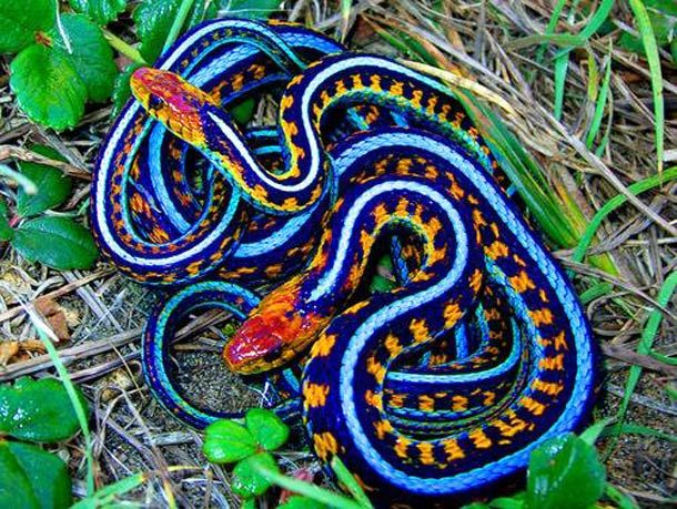 brightly colored asian snake