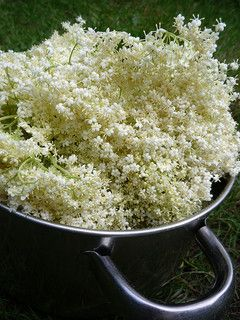 Elderflower wine recipe - one step beyond champagne and cordial