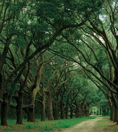 Johns island, South Carolina~ Gullah Geechee Corridor