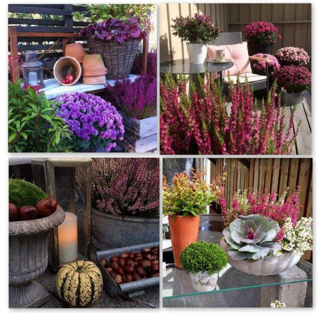 jesienne dekoracje, jesień, dynia, inspiracje, halloween, wrzos, balkon, taras, ganek