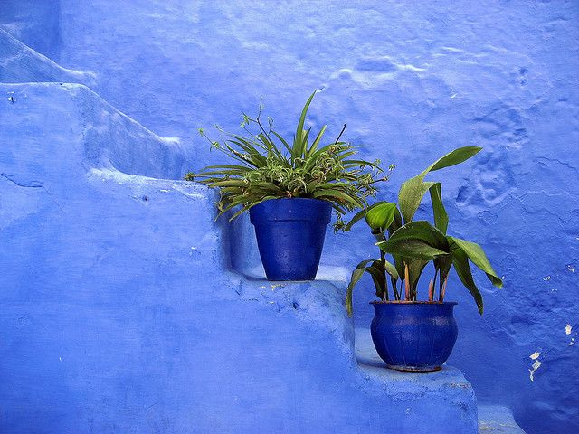 (Chefchaouen, Morocco): Plants Can, Beautiful Blue, Blue, Blue Wall, Indigo Blue, Blue Lagoon, Photo, Earthy Casa