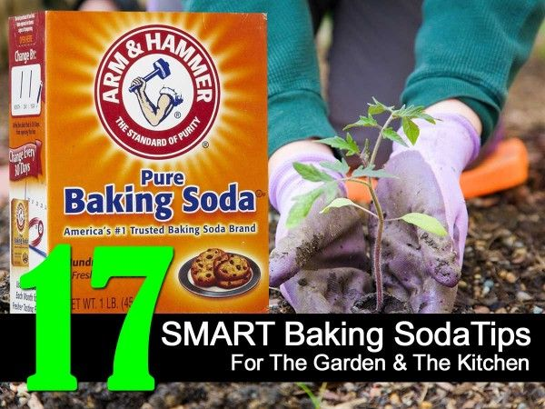 17 Smart Baking Soda Tips For The Garden and The Kitchen
