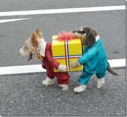 dog costume carrying package