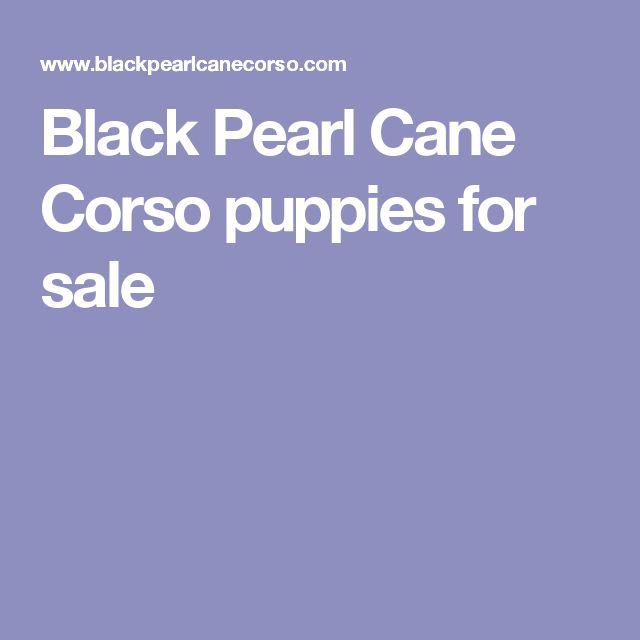 Black Pearl Cane Corso puppies for sale