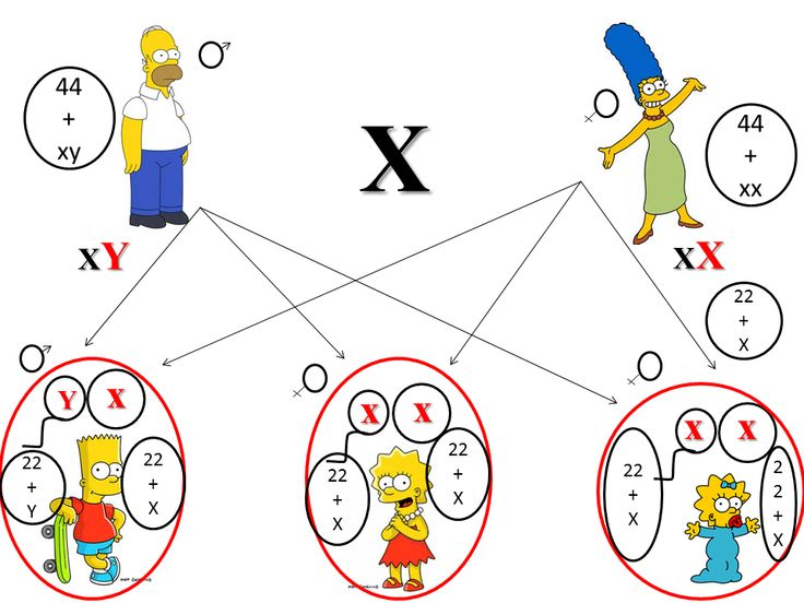 Eu Quero Biologia: Sistema de determinação do sexo: XY, X0 e ZW
