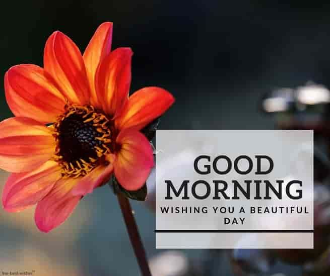 Beautiful Good Morning Thoughts Hd