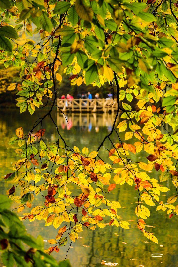 Color palette...Seven Lakes / Bolu,Turkey