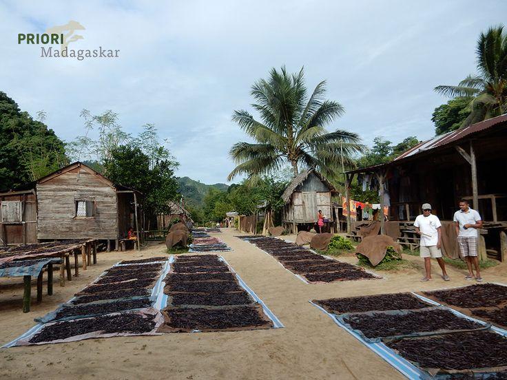 Madagaskar Vanilledorf in der Region SAVA im Nordosten Madagaskars. Hier wird 90% der weltweiten Vanille produziert. Dieses kleine Dorf lebt von der Vanille und ist nur per Boot zu erreichen.