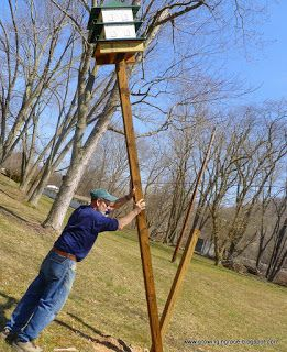 Growing in Grace: Purple Martin House on Swivel Pole