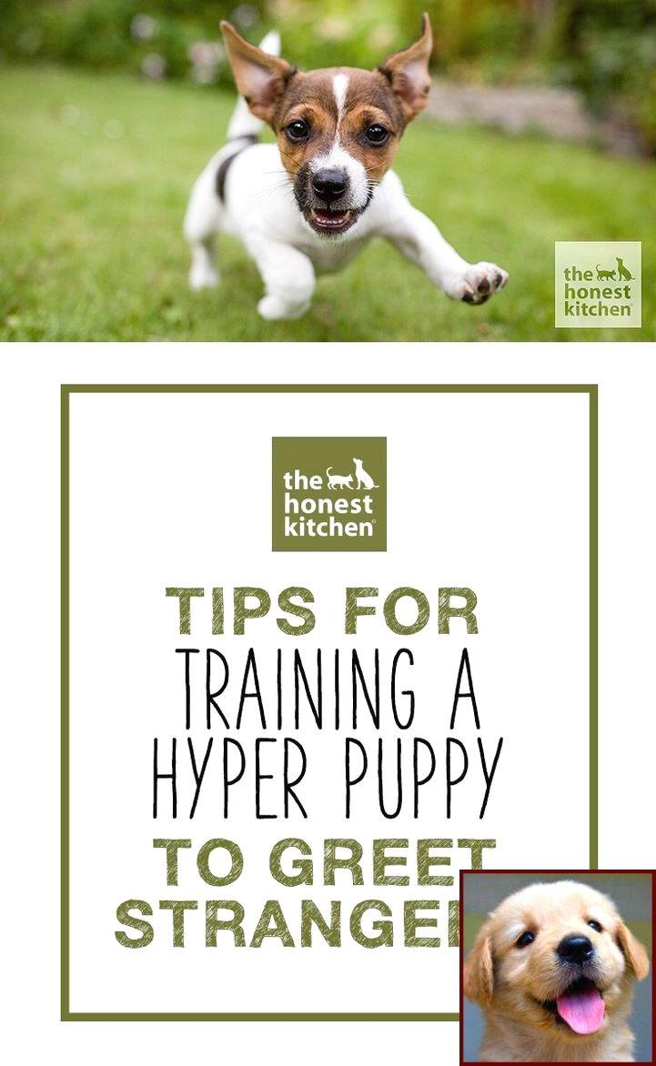 House Training A Puppy When You Work And Dog Training Courses In