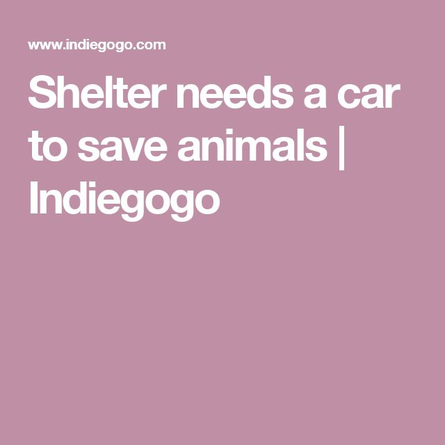 Shelter needs a car to save animals | Indiegogo