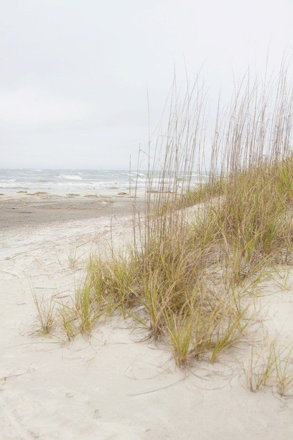 Sea Oats | Tybee Island | Georgia