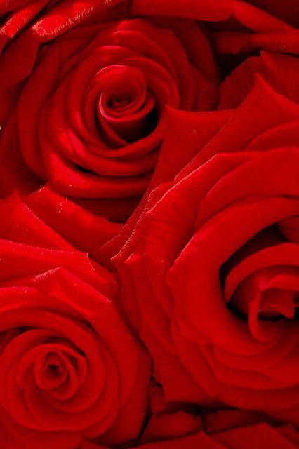 Ik kies deze kleur omdat het mijn lievelingskleur is. Het is ook de kleur van de liefde. Deze kleur geeft me ook een warm gevoel. De kleur rood geeft me ook veel informatie om te tekenen.