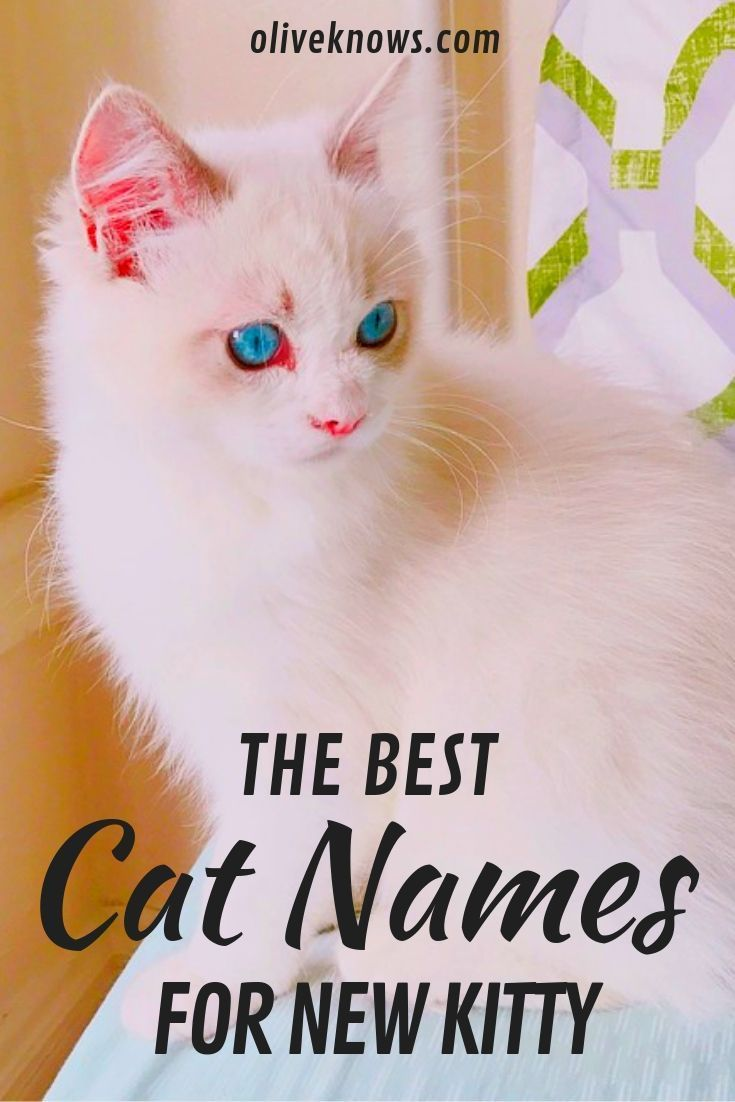 The Best Cat Names For Your New Kitty Oliveknows Cat Names Cute Cat Names Cool Cats