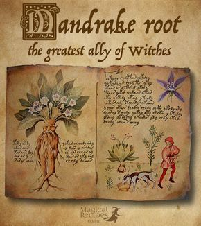 Herbal Magic of Mandrake Root The most mystical root of all and the greatest ally of witches