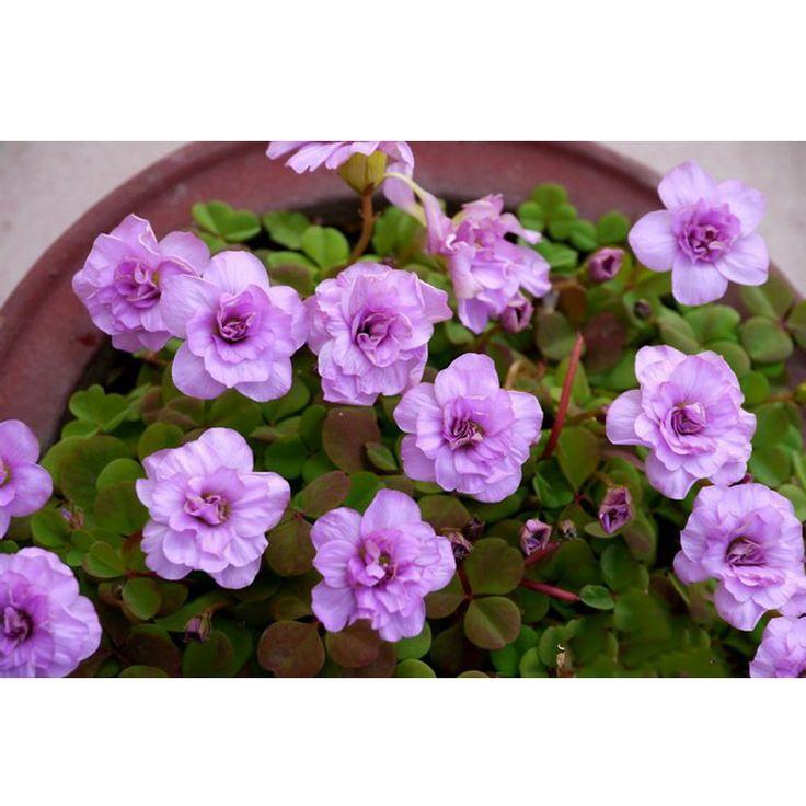 16 best gardening images on pinterest gardening garden for Little garden imports