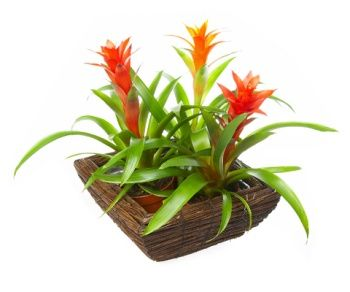 92 Best Exotic House Plants Images On Pinterest