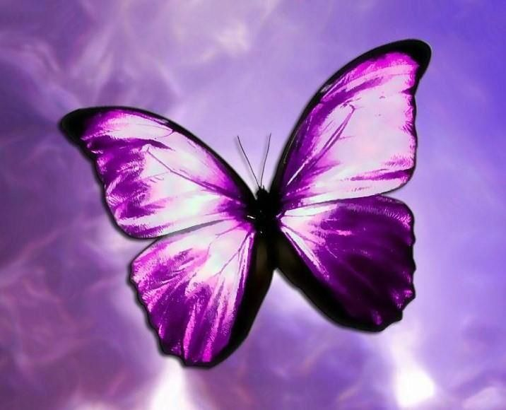Purple butterfly   Butterflies   Pinterest