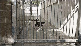 Cat Jumping 8 Feet Like No Big Deal   http://ift.tt/29eiUOa via /r/woahdude http://ift.tt/29jz5vT