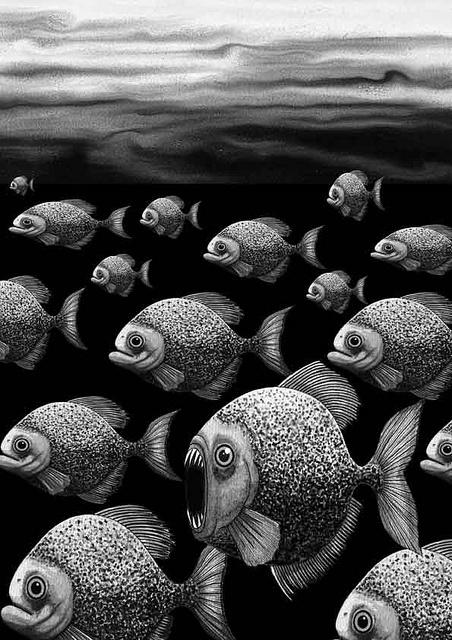 Piranha by Andrew Hitchen, via Flickr