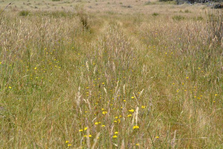 A grassy track on the east coast of #Tasmania