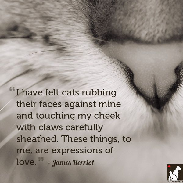 11 Quotes for the Love of Dog (or Cat) - http://www.homesalive.ca/blog/for-the-love-of-dog-or-cat/