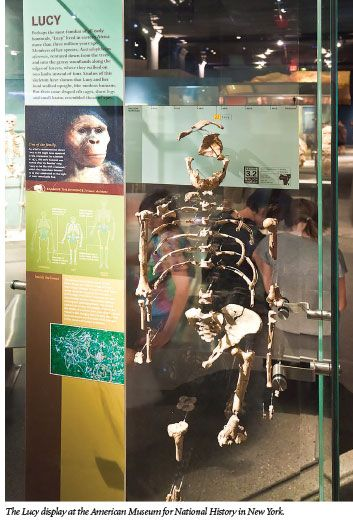 Lucy Languishes as a Human-Ape Link   The Institute for Creation Research