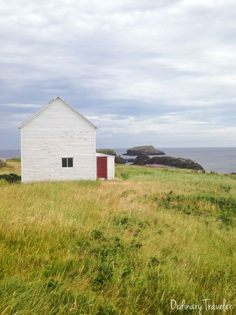 Where to find puffins in Newfoundland