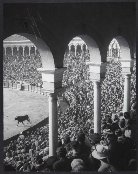 Brassaï (Gyula Halász): L'entrée du premier toro, Feria de Séville (The Entrance of the First Bull, Seville Fair) 1951