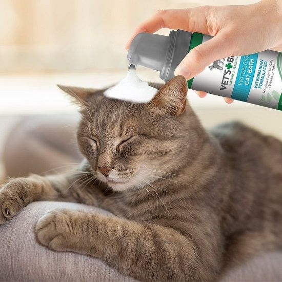 9+ Best Cat Flea Shampoo (Buying Guide 2018)  When the tiny fleas sat on the cat's body, it gets itch as well as germ from fleas. And none will like to see their favorable cats are getting disturb from those nasty insects.