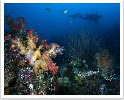 Raja Ampat: Ultimate Underwater Expedition
