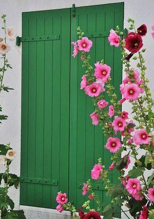 hollyhocksPink Flower, Green Doors, Green Shutters, Green Wall, Gardens Gates, Gardens Design, Pretty Flower, Cottages Home, Favorite Flower