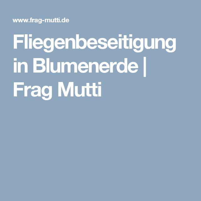 Fliegenbeseitigung in Blumenerde | Frag Mutti
