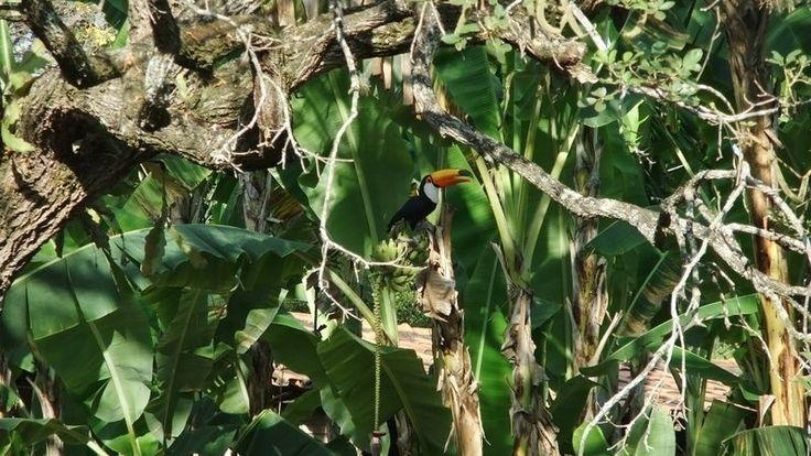 A região do Parque Estadual do Sumidouro é campo de pesquisa sobre os primeiros habitantes do Brasil e a megafauna extinta do país. O parque tem 2.000 hectares do parque e os visitantes podem conhecer atrativos como a Gruta da Lapinha, a Lagoa do Sumidouro e o Museu Peter Lund, em homenagem ao naturalista que estudou a região. Animais como o tucano-toco (foto) também podem ser observados