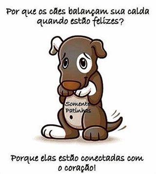 ❤❤❤ #cachorro #maedecachorro #paidecachorro #filhode4patas #petshop #petmeupet #labrador #golden #yorkshire #pug #maltes #schnauzer #shihtzu #lhasaapso #luludapomerania #viralata #bulldogfrances #amoanimais