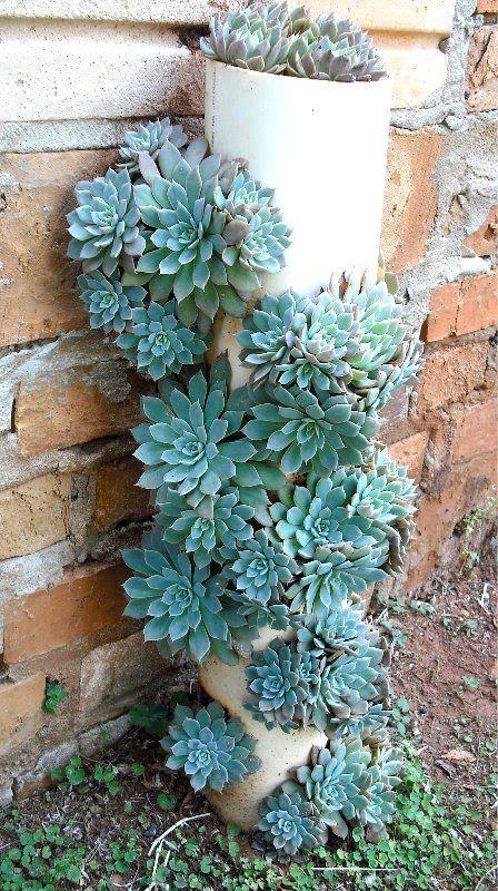 Vertical pvc pipe planter  succulents