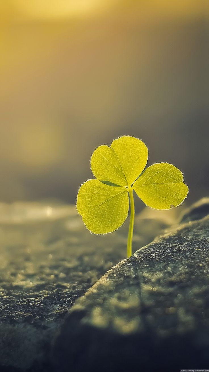 Clover - iPhone HD wallpapers | iPhone Wallpaper
