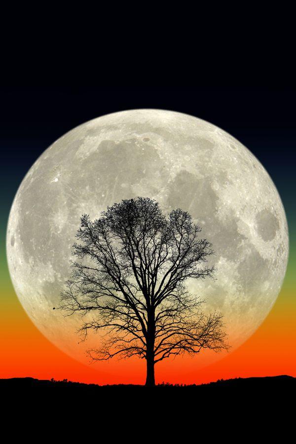 Big Tree. Big Moon. by Larry Landolfi on 500px