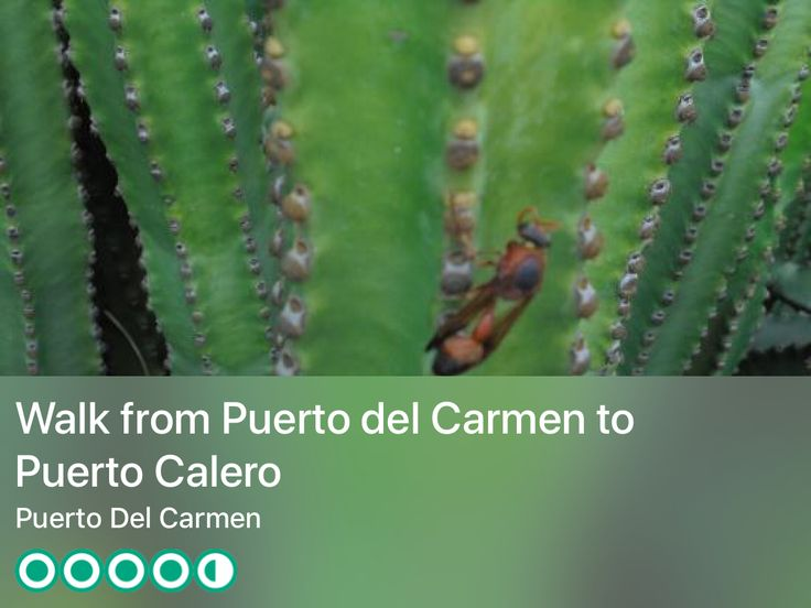 https://www.tripadvisor.ie/Attraction_Review-g662290-d8865648-Reviews-Walk_from_Puerto_del_Carmen_to_Puerto_Calero-Puerto_Del_Carmen_Lanzarote_Canary_I.html?m=19904