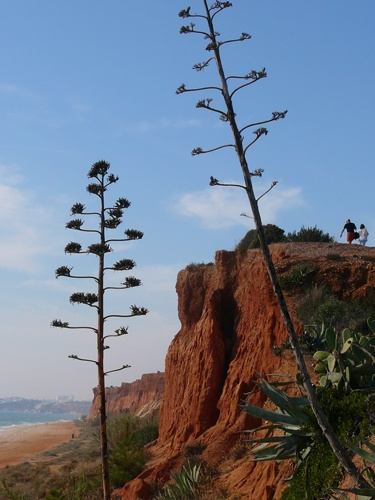 Many beaches are backed by stunningly beautiful cliffs. Falesia Beach in the central region brings Sedona to mind