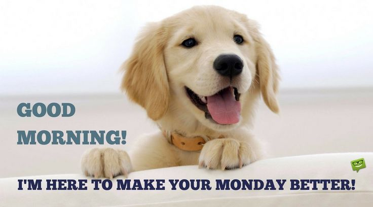 Good Morning! I'm here to make your Monday better!