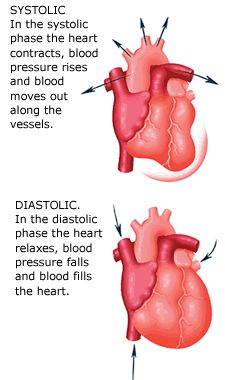 Systole is the contraction of the heart while diastole refers to the relaxation part. These terms can refer to only one area of the heart, but they mostly refer to ventricular action. When we take someone's blood pressure, the numbers that are found are systole / diastole, which is important because it can indicate the status of the heart.