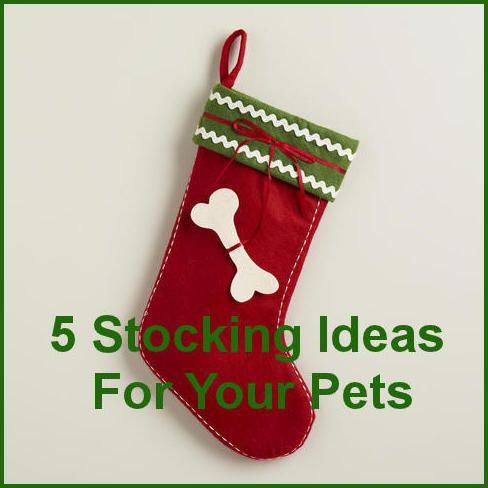 Pet Christmas Stockings: 5 Stocking Ideas For Your Pet ... #pets #animals ... PetsLady.com