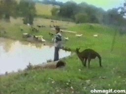 Animals Being Jerks