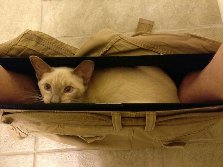Katzen gehorchen den Gesetzen der Physik nicht.