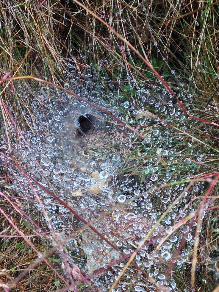 Spiders hide in the rain.