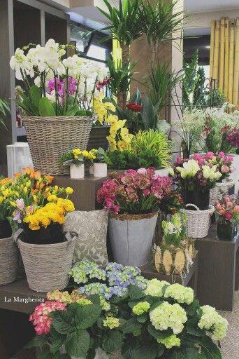 Flowers Shop  La Margherita