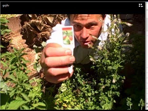 how to get goji berry seeds