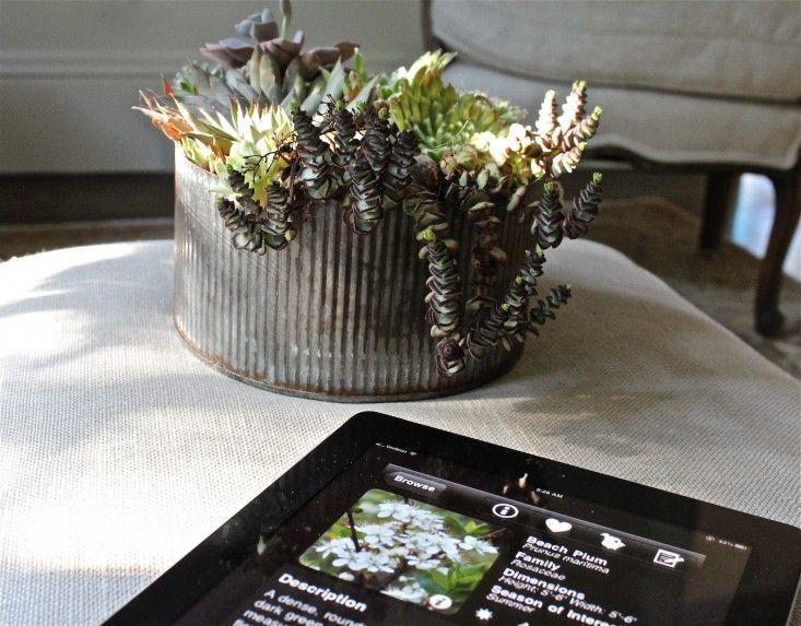 10 Besten Garten Design Apps Fur Ihr Ipad Ipad App Florafolia L Gardenista Besten Design Florafolia Gardenista Garten Ipad App Apps Gartenarbeit