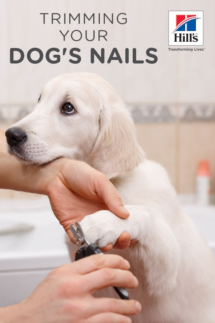 Nail Trimming Dog Nails Dogs Dog Care